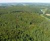 Quimperlé 39, forêt de Toulfouën